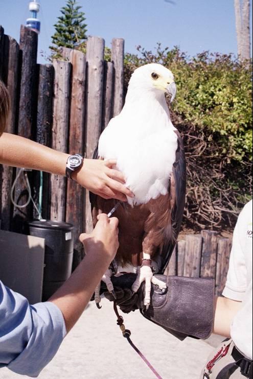 eagle injection SeaWorld