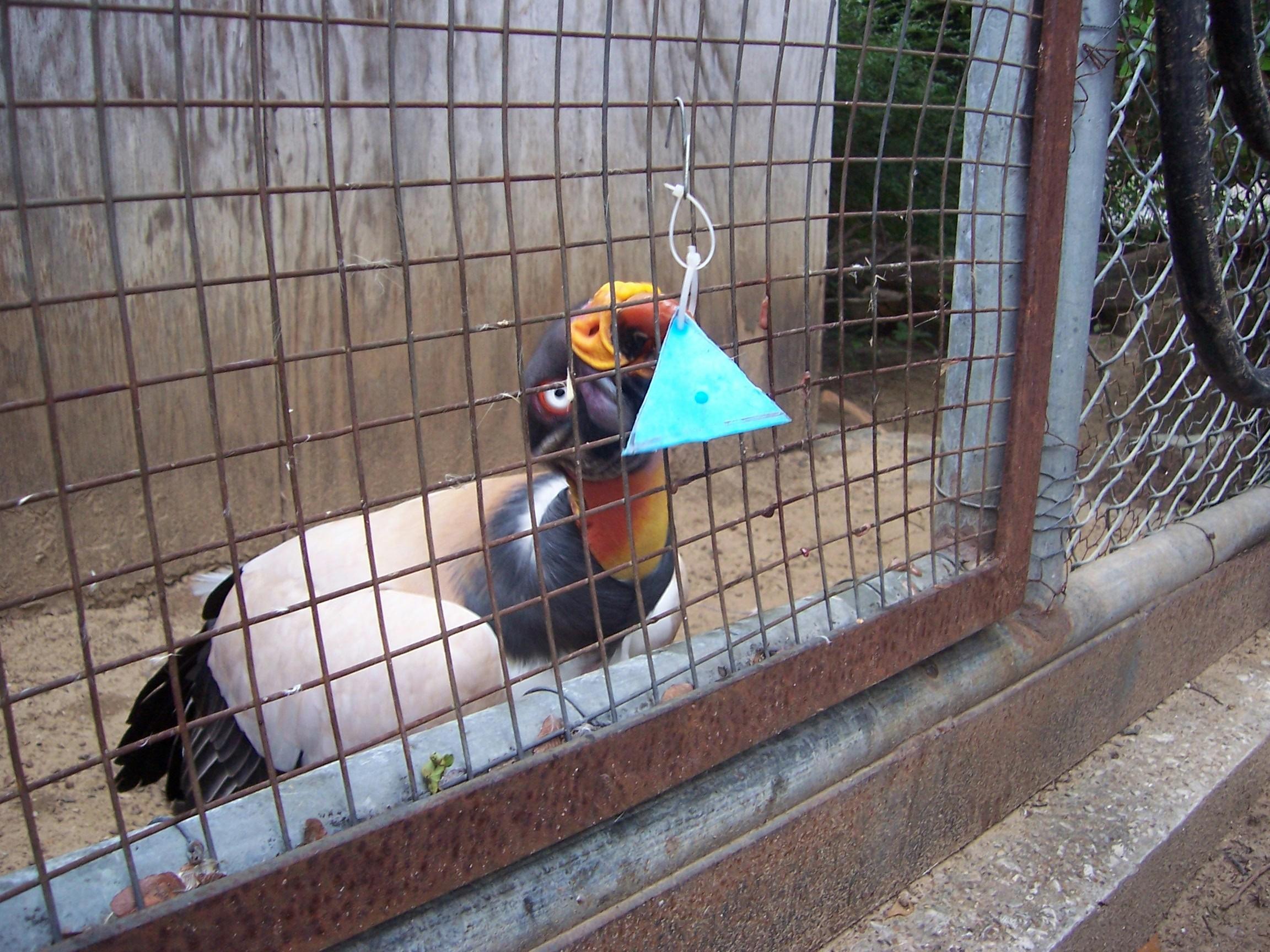 vultureson target