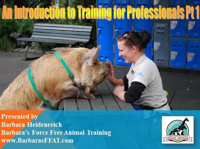 Introduction to Training Webinar-Part 1 Practical Application