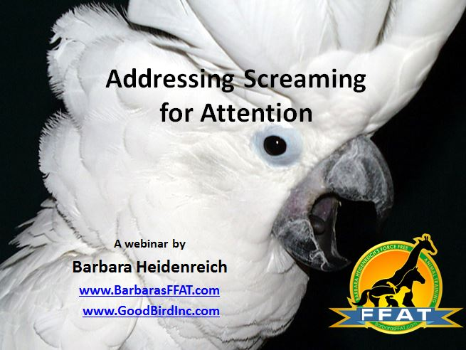 screaming webinar