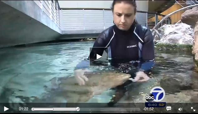 Training Sharks at California Academy of Sciences
